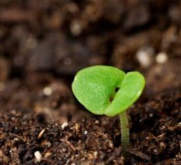 Heirloom Seed